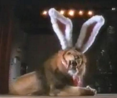 Cadbury Bunny auditions commercial - Rawr