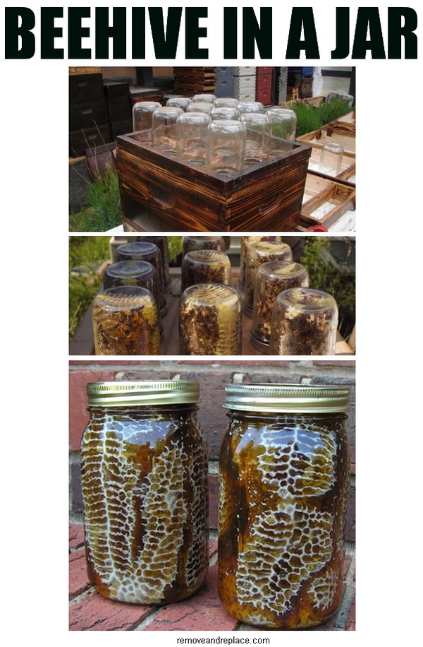 DIY Beehive in a Jar - Backyard Honey!