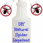 DIY Natural Spider Repellent