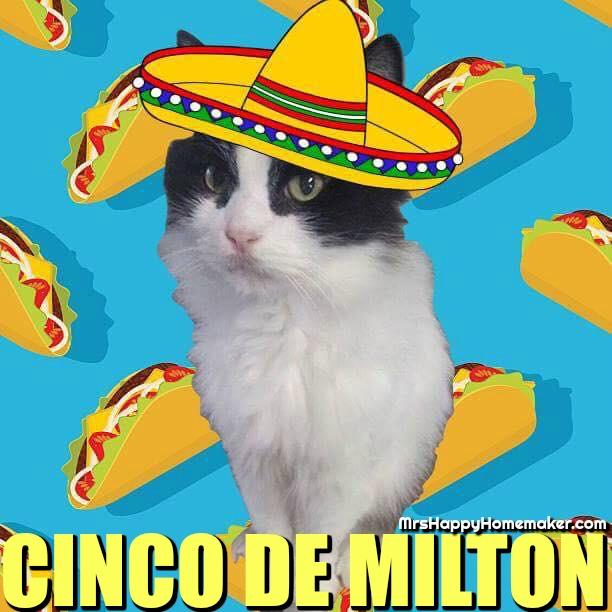 Milton the black and white kit with a cartoon sombero and cartoon taco background - Cinco de Milton