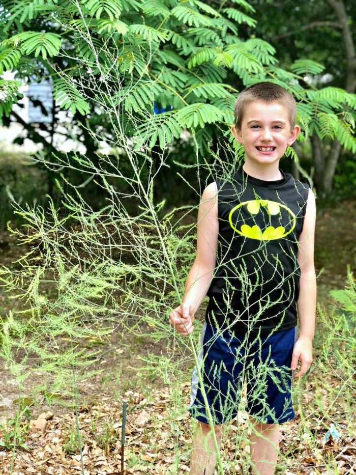 little boy with a batman shirt next to overgrown asparagus plant