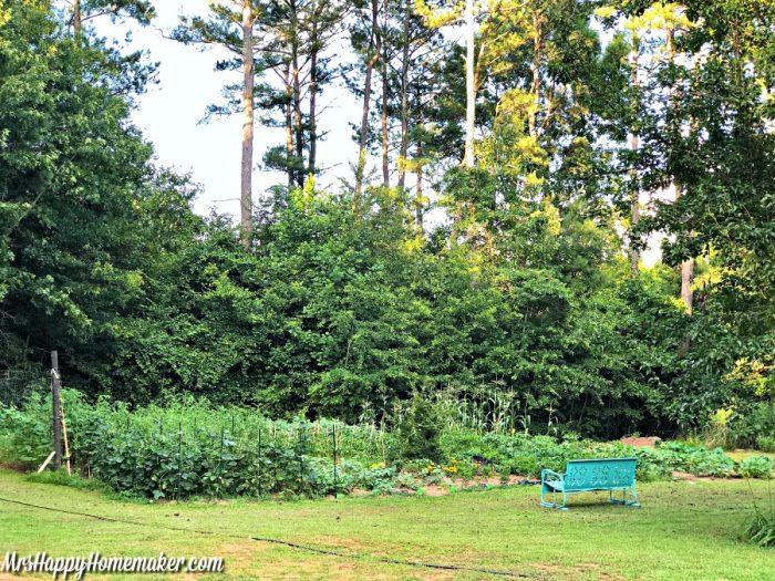backyard garden with a blue metal bench